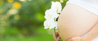 Беременная с цветком