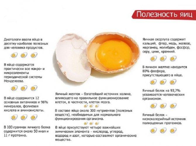 Egg guru — первый про яйца. вред или польза от яиц, приготовленных всмятку