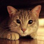 К чему снятся коты женщине: замужней, незамужней, девушке, беременной – толкование по сонникам