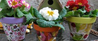 Как украсить цветочный горшок кружевом, ракушками, мозайкой, тканью, крупами и веточками своими руками фото