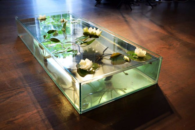 Куда лучше поставить аквариум