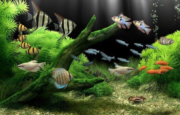 Куда ставить аквариум в квартире