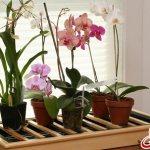 орхидея отцвела