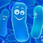 пребиотики - что это?
