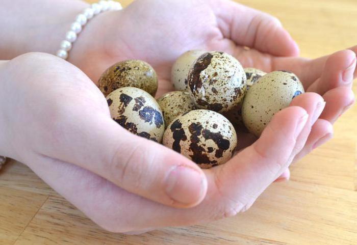 вареные перепелиные яйца польза и вред